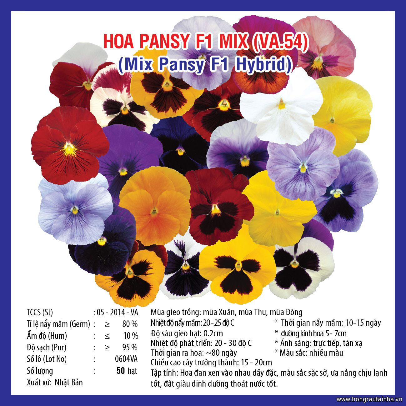 HOA PANSY MIX F1